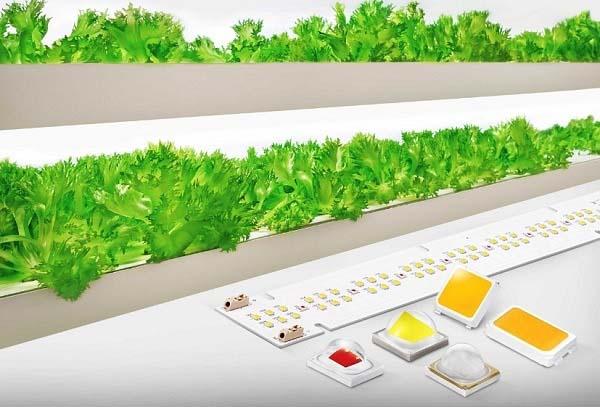 Samsung Electronics представи нови LED решения за оранжерийното производство
